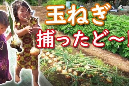 畑 玉ねぎ in Youtube